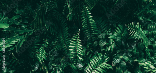 Tropical green leaf in dark tone. Canvas