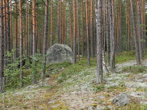 Obraz na plátne  Finnischer Wald an einem bedeckten Tag