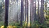 Jesienny las we mgle.
