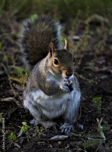 Fotobehang Eekhoorn Squirrel eating