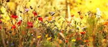 Wildblumenwiese Im Spätsommer