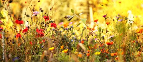 Poster Jaune Wildblumenwiese im Spätsommer