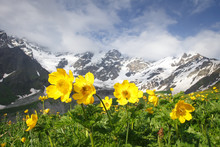 Amazing Mountain Landscape With Yellow Flowers On Foreground On Clear Summer Day In Svaneti Region Of Georgia. Snowy Peaks Of Mountains Between Blue Sky With Clouds And Green Meadow With Flowers