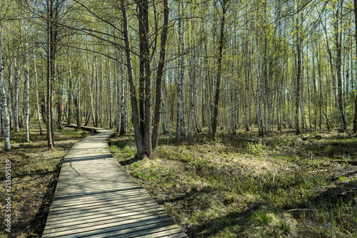 Spoed Foto op Canvas Khaki wooden footpath boardwalk in the bog swamp area