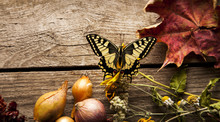 Butterfly On Vegetables On Vintage Wood Background. Flat Lay Composition, Autumn (fall)