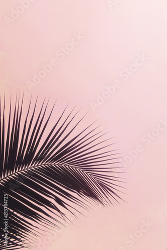 One palm leaf silhouette against pink colored sky. Creative minimalism. Copyspace for text
