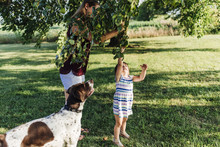 Mother Assisting Daughter In Picking Apples From Tree While Standing On Grassy Field