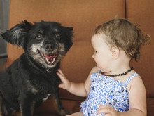 Close-up Of Cute Baby Girl Touching Dog While Sitting At Home