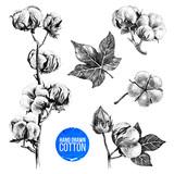 Hand drawn set of cotton - 213709305