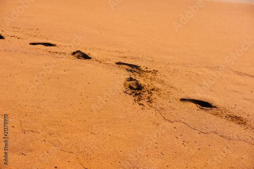 Foto op Canvas Baksteen Footprints trace on wet golden sandy beach, sunset time