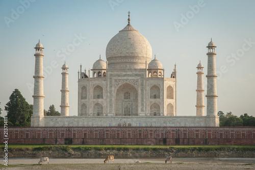 Fotografie, Obraz  Blick auf das Taj Mahal