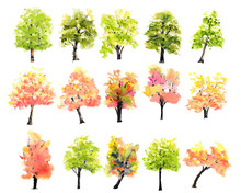 Collection Of Watercolor Trees On White Background, Hand Painted, Tree Illustrator