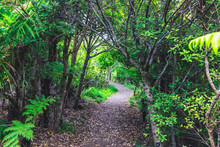 Trail In The Tropical Forest O...