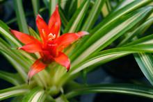 Bromeliads Flower Colorful