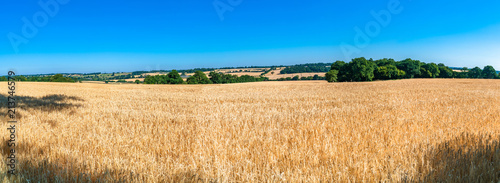 Fotobehang Platteland Wheat growing on the field, summer in Middlesex, UK. Wide panoramic view.
