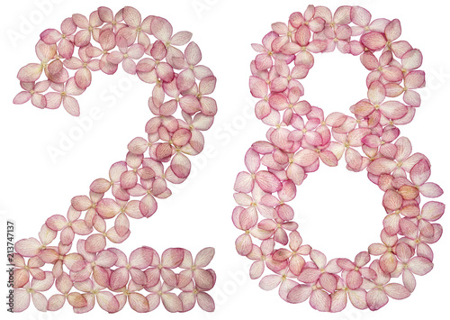 Fotografia  Arabic numeral 28, twenty eight, from flowers of hydrangea, isolated on white ba