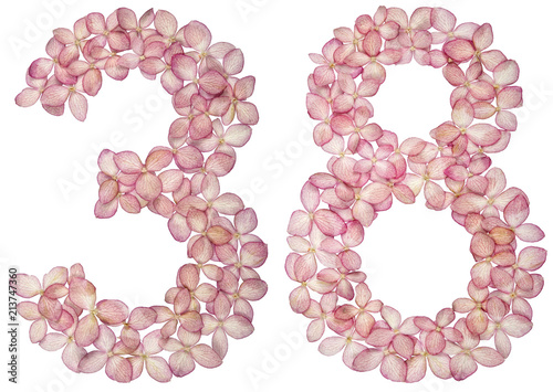 Tela  Arabic numeral 38, thirty eight, from flowers of hydrangea, isolated on white ba