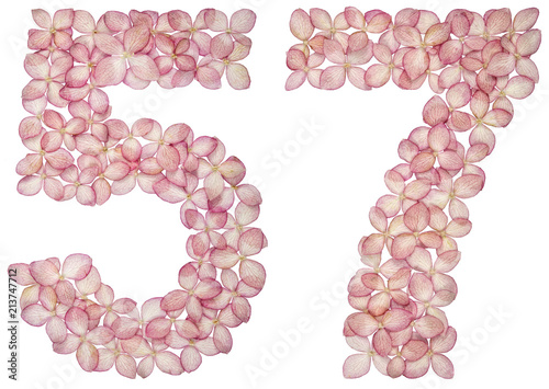 Fotografie, Obraz  Arabic numeral 57, fifty seven, from flowers of hydrangea, isolated on white bac