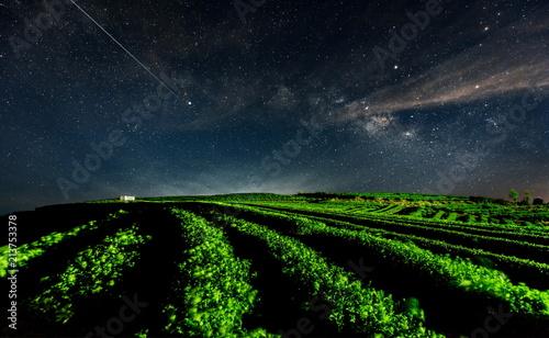 Foto op Plexiglas Nachtblauw The Galactic sky above the tea garden