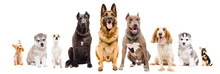 Group Of Dogs Of Different Bre...