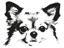 Chihuahua Chien Silhouette