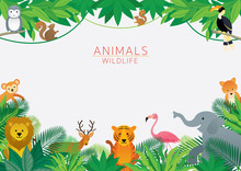 Wild Animals In Jungle, Frame,...