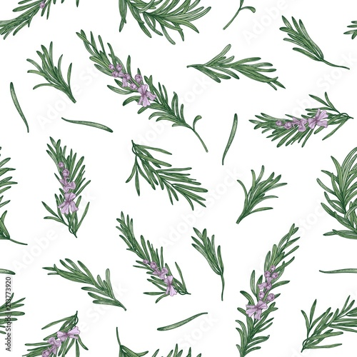 Fotografie, Obraz Herbal seamless pattern with rosemary sprigs on white background