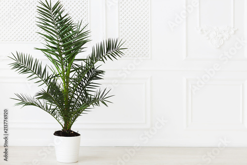 Poster Vegetal The empty in light tones room with palm plant