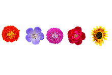 Collection Wild And Garden Flowers Isolated On White, Top View