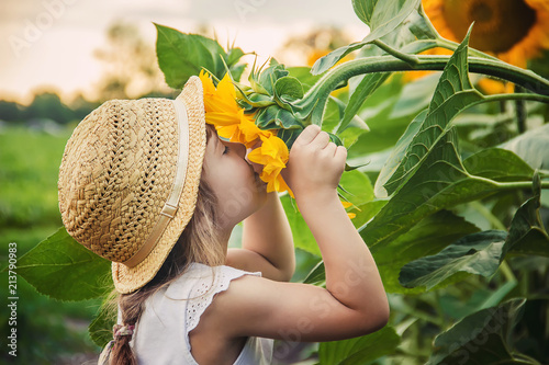 Poster Tournesol child in the field of sunflowers is a small farmer. selective focus.