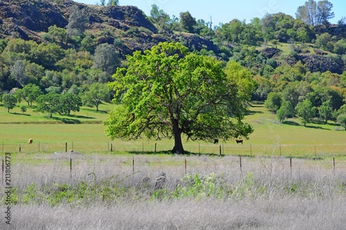 Poster Pistache Beautiful Landscape of Trees, mountains, hills and grass field in California, United States