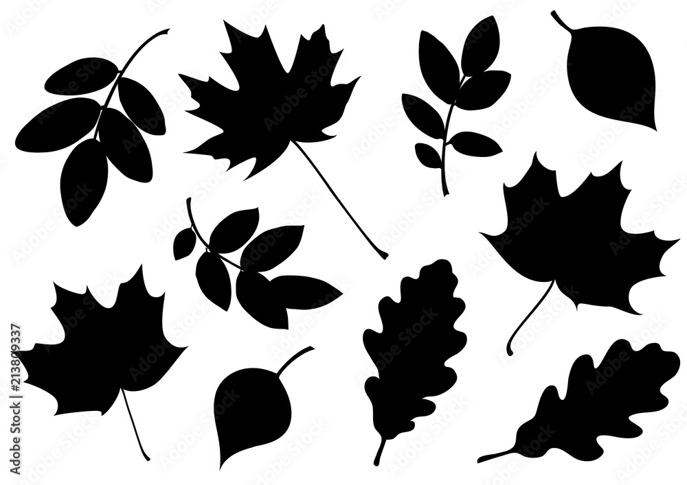 Fototapeta Vector set of decorative autumn leaf silhouettes.