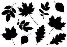 Vector Set Of Decorative Autum...
