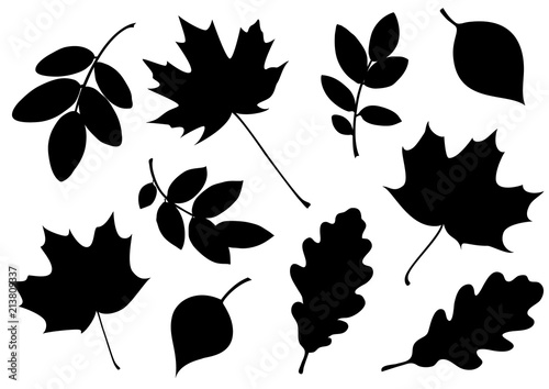 Obraz Vector set of decorative autumn leaf silhouettes. - fototapety do salonu