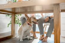 Happy Dog Sitting Under The Ta...