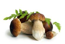 Mushrooms Cep In Summer  Season