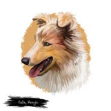 Collie Rough Scottish Dog Breed Digital Art Illustration