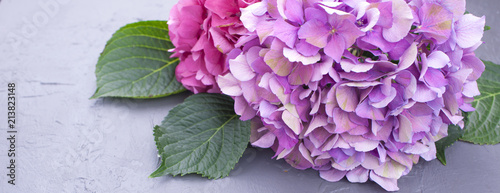 Pink hydrangea flowers, on a gray background, free space for text. Card, Copy space,