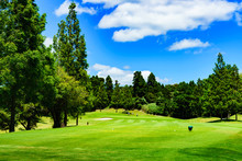 Landscape Of Japanese Golf Course In Chiba (No1800)