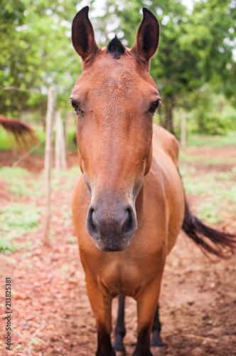 Keuken foto achterwand Paarden Front horse portrait