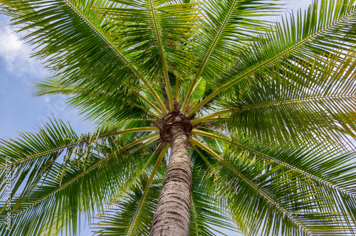 Keuken foto achterwand Palm boom The most beautiful picture of palm tree, sea with blue sky background