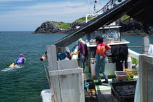 乗合船から漁場へ泳ぎ...