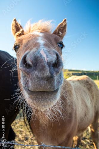 Foto op Canvas Paarden Yello!