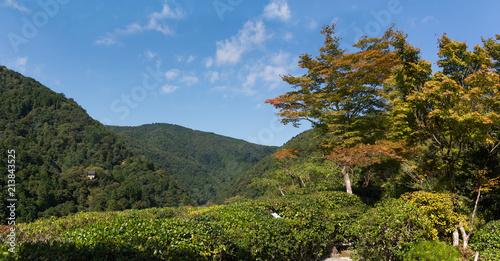 Japanese garden landscape panorama