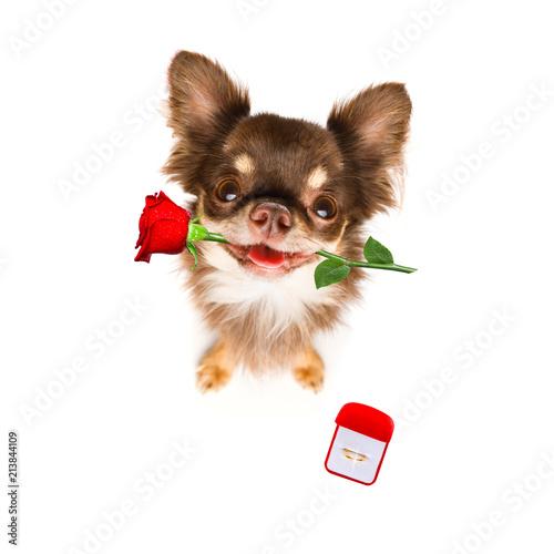 Valokuva wedding proposal dog with marraige ring