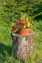 Beautiful Flowers On A Stump