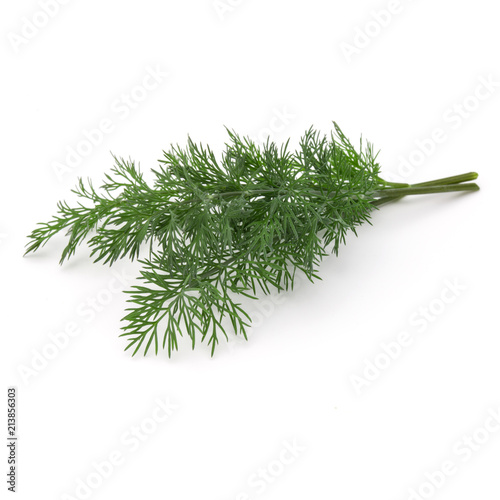 Deurstickers Aromatische Close up shot of branch of fresh green dill herb leaves isolated on white background