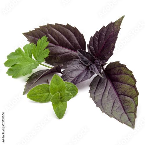 Deurstickers Aromatische Fresh herb leaves variety isolated on white background. Purple dark opal basil, oregano, parsley.