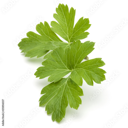 Deurstickers Aromatische Fresh parsley herb leaves isolated on white background