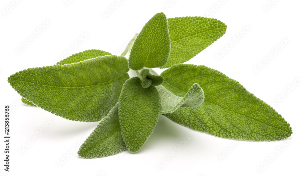 Fototapety, obrazy: Sage herb leaves  bouquet isolated on white background cutout.